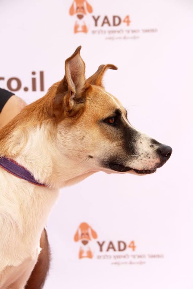 מתוחכם אירוע הפנינג אימוץ כלבים וחתולים ענק באשדוד! | מרכז קהילתי דיונה WO-74